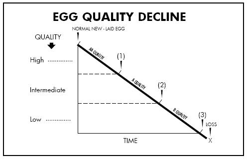 Egg Quality Decline